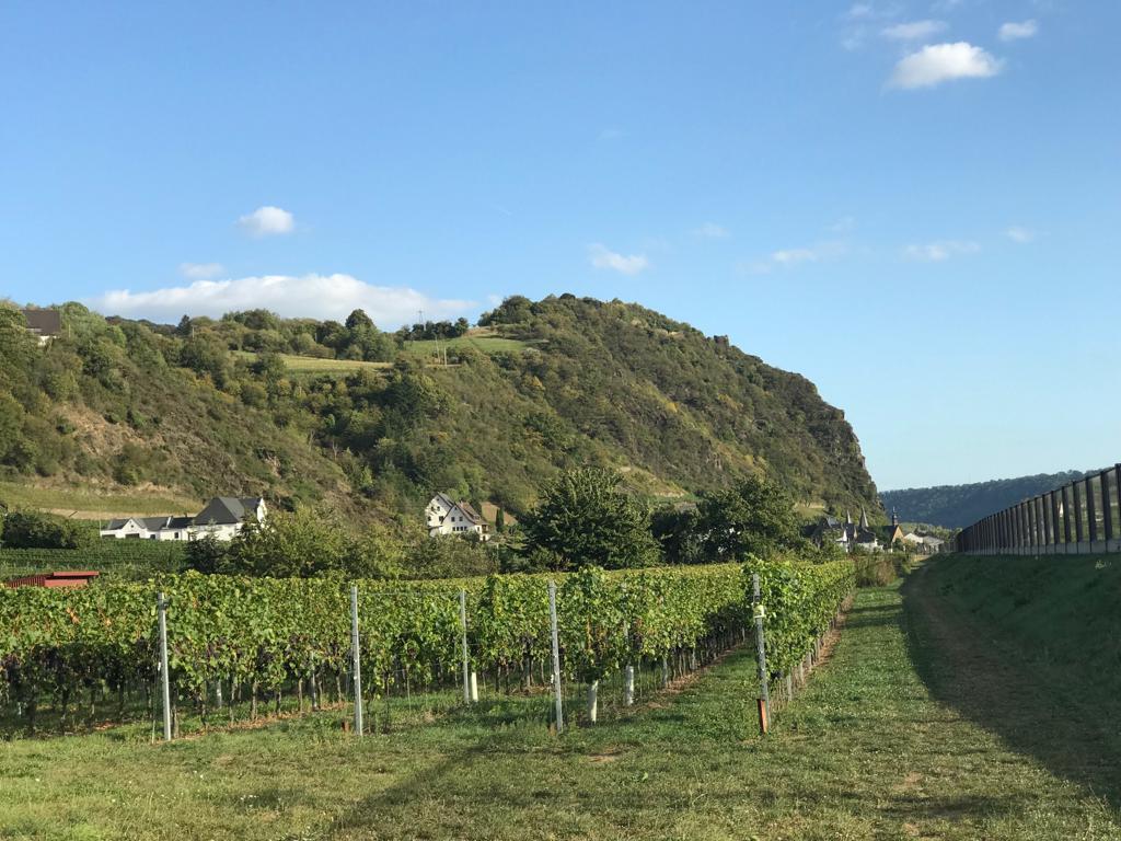 Weingerge bei Hammerstein