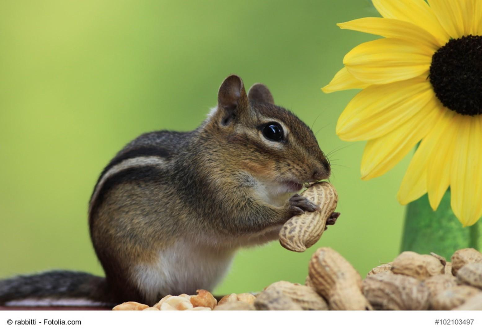 Erdnussallergie darf man auf keinen Fall unterschätzen. Erdnussspuren finden sich in Lebensmitteln und in der Atemluft. Aber auch hier gibt es Lösungen.