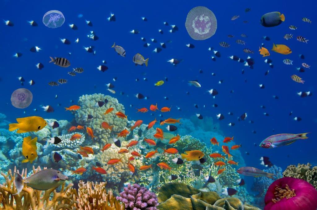 Vielfalt: Farbenfrohe Unterwasserwelt im Riff mit Fischen und Korallen